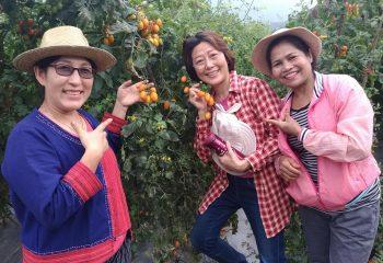 picking-up-fruit_j2xkdi